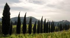 Cipressi in corsa (angelicchiatrullall (yeppa!)) Tags: tree countryside italia country campagna tuscany toscana cipressi