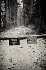 114537 (Myrkwood666) Tags: road wood bw monochrome forest blackwhite belgium belgique zwartwit sw schwarzweiss bos wald weg flanders belgien vlaanderen flandern myrkwood666