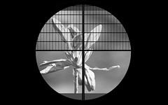 Bud (karakutaia) Tags: sun tree love nature japan paper temple tokyo heart afotando flickraward flickrglobal allbeautifulshotsandmanymoreilovenature flowerstampblackandwhite transeguzkilorestreetarturbanagreatshotthisisexcellentcontestmovementricohgxrserendipitygroupbluenatureicapturecardjapanesepapercardflickraward5jtrasognoerealtabstractelementsorganizersimplysuperb