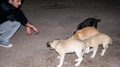 *** (Artur (RUS) Potosi) Tags: dog man guy animal sport football outdoor soccer 2010 footballer