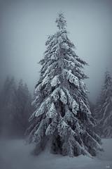 Really Cold (*altglas*) Tags: schnee winter snow tree ir infrared schwarzwald blackforest baum infrarot