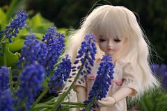 Lizzy (CornflowerBlue07) Tags: isabel 16 yosd mystickids