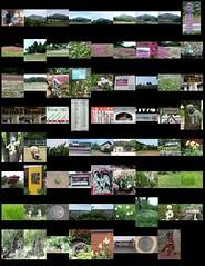 preview of coming attractions: day trip to Chichibu 2016/05/08 (Nemo's great uncle) Tags: moss saitama phlox chichibu phloxsubulata    subulata mossphlox  yokoze