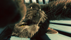 "Larissas ""Selfie"" (*Nils aus Kiel*) Tags: portrait cats pets animals lights tiere eyes shadows bokeh paws katzen selfie"