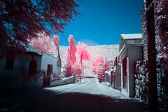 Amigo's Road (jrseikaly) Tags: road pink lebanon color nature ir jack photography down fantasy infrared arz cedars ariz seikaly jrseikaly