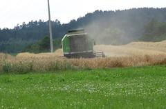 ...laut und staubig! ...loud and dusty! (elisabeth.mcghee) Tags: wheat harvest ernte wheatfield getreide mhdrescher getreidefeld