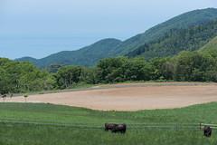 5Ikari Field Farm (anglo10) Tags: field japan kyoto seashore