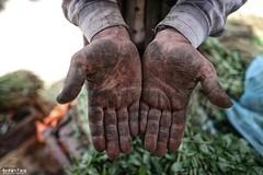"Photos of hard working hands in #Gaza to mark ""labor day"" (TeamPalestina) Tags: sunset sky sun sunrise landscape landscapes photo am amazing nice photographer natural sweet live palestine comfort sunrays gaza beautifull palestinian  landscapecaptures"