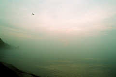 Solo Flight (Georgie_grrl) Tags: morning toronto bird misty fog sunrise gull flight foggy pentaxk1000 lakeontario thebeaches brightandearly rikenon12828mm hangingoutwithmskat springshootingshenanigans