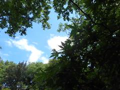 Ψίνθος (Psinthos.Net) Tags: sky nature leaves clouds countryside spring may valley greenery noon planetree φύλλα φύση σύννεφα μεσημέρι άνοιξη bluessky psinthos πρασινάδα εξοχή wildivy κοιλάδα ουρανόσ πλάτανοσ νέφη μάιοσ μάησ γαλάζιοσουρανόσ ψίνθοσ psinthosvalley κοιλάδαψίνθου άγριοσκισσόσ ανοιξιάτικομεσημέρι μεσημέριάνοιξησ κοιλάδαψίνθοσ