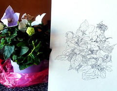 1541_2 ( ) Tags: flowers plants illustration ink botanical fountainpen 365 sketches platinum