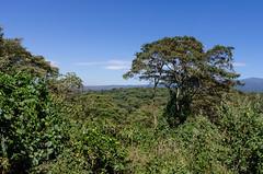 three years later (sixthofdecember) Tags: africa travel trees sky tree green nature sunshine tanzania outside outdoors bush nikon sunny safari ngorongoro ngorongorocrater tamron bushes shrubbery tamron18270 nikond5100