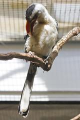 National Zoo  (1334) (smata2) Tags: birds zoo nationscapital smithsoniannationalzoo itsazoooutthere zoosofnorthamerica