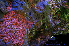 Jameos del Agua (clarefia) Tags: lighting travel reflection nature water pool beautiful rock architecture landscape volcano lava interesting colours lanzarote explore albino dreamy cave crabs magical volcanic canaryislands mothernature sunray rockformation cesarmanrique lavatunnels clareadamson seacrabs clarefia