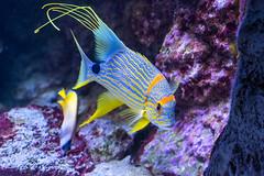 Ocean life (mikes.space) Tags: fish animal utah ut tropicalfish aquaticlife oceanlife livingplanetaquarium sonya7