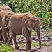 David Sheldrick Elephant Orphanage 5