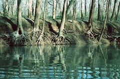 (rqlevy) Tags: travel trees reflection nature analog 35mm canon xpro crossprocessed kodak kentucky slidefilm greenriver expired ektachrome ftb canoetrip 320t