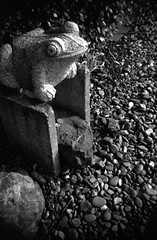 (treasure) (Dinasty_Oomae) Tags: street blackandwhite bw monochrome blackwhite shrine outdoor frog chiba zeissikon  boxcamera funabashi       boxtengor