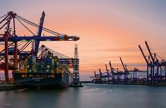 Abendstimmung im Containerhafen (Dieter Gora) Tags: haven port harbor ship hamburg terminal container hafen schiff msc dockside schwimmkran waltershof msckatrina