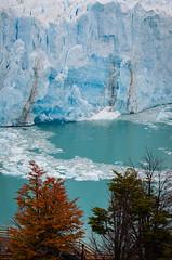 Calving (ckocur) Tags: patagonia ice southamerica argentina nationalpark glacier peritomoreno elcalafate icefield southernpatagonia
