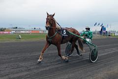 IMG_2384 (lovelymelancholy) Tags: horses horse hevoset hevonen horseraces ravit imrautio ravihevonen oulunravirata
