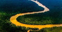 Vein (Jorge Hamilton) Tags: amazonia amazon river rainforest floresta amaznica par belm belem rio igarap