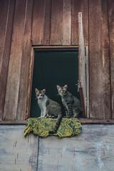Cats in Kanchanaburi (ReinierVanOorsouw) Tags: travel sony sonya7r2 a7rii travelling bbm reiniervanoorsouw reizen opreis thailand thai siam kanchanaburi thajsko asia asya azi  tailandia thaimaa  photography  thalande   experience vacation tayland   new travels travellingasia inasia