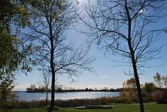 fall_245 (Sascha G Photography) Tags: autumn trees toronto color tree fall leaves leaf nikon seasons waterfront lakeshore indiansummer d60