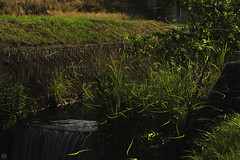 20160618-DS7_6729-6741-3.jpg (d3_plus) Tags: street sky plant mountains nature field japan bug nikon scenery nightshot dusk illumination daily  streetphoto nightview 28105mmf3545d toyama nikkor ricefield     dailyphoto  riceplant  28105 lightdisplay     28105mm   zoomlense        28105mmf3545 toyamapref d700 281053545 nikond700  aiafzoomnikkor28105mmf3545d  28105mmf3545af photoshopcc sankyovillage aiafnikkor28105mmf3545d