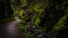 The Enchanted Passage (Images by William Dore) Tags: forest woods woodland woodlands scotland argyll uk landscape dark lush saturated nikon d810 nikond810 trees green water river outside outdoors