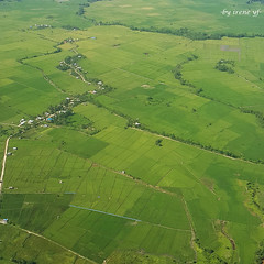 green from the air (irene yf) Tags: green indonesia landscape fromabove fromtheair sawah kendari southeastsulawesi