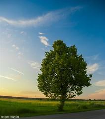 image046 (DanielDeptula) Tags: turzyn polska poland drzewo zota godzina golden hour nikon d80 deptula nieba chmury cloud