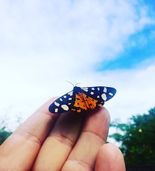 Hello mec (antoinemusique) Tags: humanvsnature papillon papillons nature