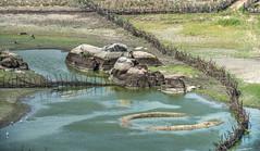 Serto de Crates (felipe sahd) Tags: brasil aves cear animais nordeste aude rochas cercas pedralisa sertodecrates