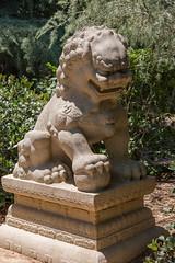 Lion Dog (Thad Zajdowicz) Tags: liondog sculpture statue art chinese chineseguardianlion zajdowicz sanmarino california canon eos 5dmarkiii dslr digital outdoor outside availablelight daylight light fierce shadow