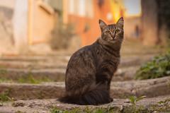 LVM - Escalones: La Costete (Nathalie Le Bris) Tags: sunset france stairs cat atardecer chat village pueblo escalera gato francia escalier escaln cret