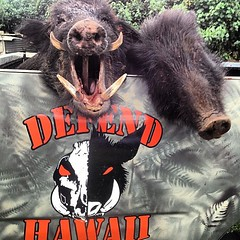 "@brianakina with another shot! Chee! Be sure to visit our personal blog DEFENDHAWAII.COM for an external link to view the ""HANAPA'A HOUNDZ""'thread we have for you all to enjoy! Mahalo ! #supportlocal #hunting #defendhawaii • <a style=""font-size:0.8em;"" href=""http://www.flickr.com/photos/89357024@N05/8721685794/"" target=""_blank"">View on Flickr</a>"