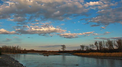 Sheep River @ Blue Hour (LostMyHeadache: Absolutely Free *) Tags: trees sunset sky bird nature water animal clouds canon river rocks goose shore bluehour davidsmith sheepriver calgaryalbertacanada eos60d