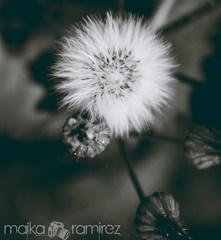 . (maika.) Tags: flowers atlanta nature beautiful canon photography pretty bokeh t3i 600d canonrebelt3i