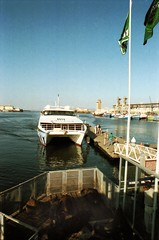 Cape Town South Africa Waterfront Quay Inner Harbour Dec 9 1998 190 Seals at the Harbour (photographer695) Tags: africa town waterfront harbour south capetown quay dec inner cape 1998