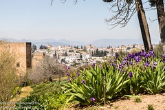 La Halmbra (doublejeopardy) Tags: spain events places granada andalusia continent laalhambra holiday29131