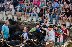 028 (Angel T.) Tags: horse white black color blanco caballo spain negro galicia estrada tradition pontevedra tradicion rapa sabucedo bestas