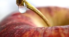 Apple 2 (mattpbunting) Tags: red food macro apple water closeup fruit close eat hungry stalk nutrition