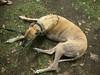 GreyhoundPlanetDay2008058