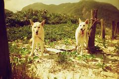 Sal & Biju (thais mr.) Tags: kodak grumari redscale kodakcolorplus200 yashicamf3