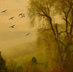 ```` willow (xandram) Tags: texture birds yellow fog photoshop moody hills willow creativemindsphotography
