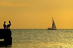P1100728 (claymore2211) Tags: ocean sunset two pelicans water birds silhouette yellow sailboat gold golden pier boat dock florida horizon winner challengeyou flickrchallengegroup friendlychallenges ultrahero thechallengefactory superherochallenges herowinner