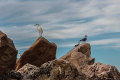 Birds (Dan Ydov) Tags: dan birds rocks photografer ydov