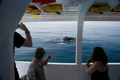surfacing baby whale (Beau Finley) Tags: dominicanrepublic whale humpbackwhale republicadominicana babywhale repúblicadominicana beaufinley