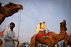 Sadhus (Leonid Plotkin) Tags: india festival religious asia religion celebration camel ritual hindu hinduism mystic sadhu ascetic holyman allahabad kumbhmela kumbh kumbhamela